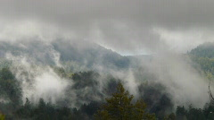 Redwood Forest Fog & Rain HSD 01 Time Lapse x4 - stock footage
