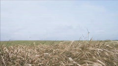 Windmills in the distance Stock Footage