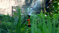 Sprinkler pour grass Stock Footage