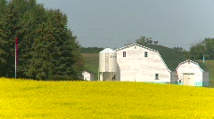 agriculture, canola field and white barn  - stock footage