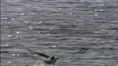 Seagull Beagle channel 2 Stock Footage