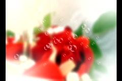 4518 kuplat ruusuja morsian sulhasen paahtoleipää samppanja Arkistovideo