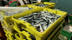 Unloading fish at Santona Port - stock footage