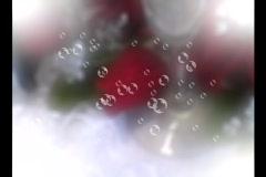4519 kuplat ruusuja morsian sulhasen paahtoleipää samppanja Arkistovideo