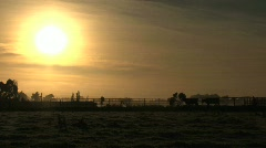 Cows walking at sunrise Stock Footage