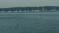 Sail boats and ducks Stock Footage