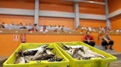 Fish auction Stock Footage