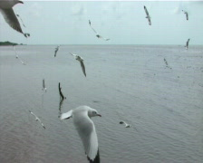 Seagull flying back and forth Stock Footage