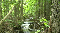 Small stream in the woods during summertime in Sweden - stock footage