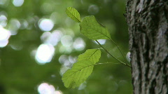 Green leafs Stock Footage