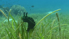 Nudibranch on Seagrass Stock Footage