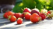 Stock Video Footage raspberry autumn garden Stock Footage