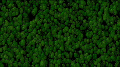 Abstract green cells and virus background.alveolus,bacterium,biology,cell,flow, Stock Footage