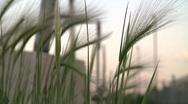 Urban wild grass at sunset Stock Footage