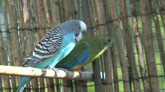 Colorful birds Stock Footage