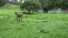 Stock Video Footage of Donkey