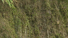 Dripping water moss covered bank Stock Footage