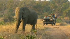 Stock Video Footage of Elephant Safari