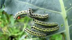 Caterpillar Stock Footage