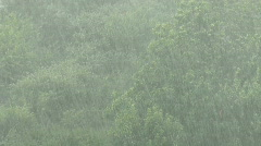 Rain storm over trees Stock Footage