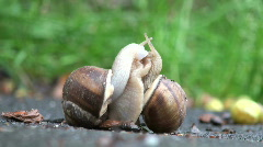 2 snail going  Stock Footage