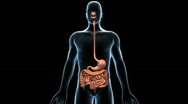 Stock Video Footage of Digestive System, 360 Degree Rotation