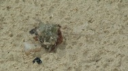 Stock Video Footage of hermit crab