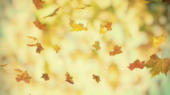 Autumn falling foliage 02 - looped 3d animated bacground v2 Stock Footage