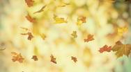 Autumn falling foliage 02 - looped 3d animated bacground v2 Stock Footage