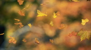 Stock Video Footage of falling leaves blowing in the wind 03 - looped and masked v2