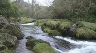 Stock Video Footage of fast flowing stream through forest