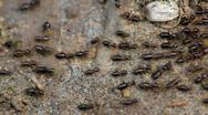 Termites on ground Stock Footage