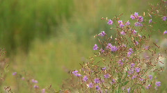 Colorful summer wild flowers Stock Footage