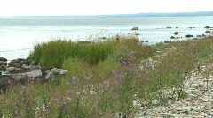 Colorful summer wild flowers on an stone beach Stock Footage