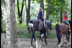 Children walk on a horses Stock Footage