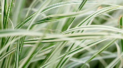 Lush green grass Stock Footage