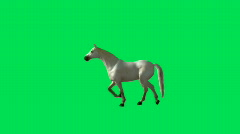 Horse Galloping Green Screen Stock Footage