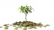 Little Dollar Tree Stock Footage