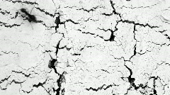 Аnts running on the white cracked surface - stock footage