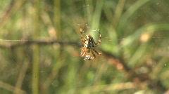 Spiderweb from a European garden spider Stock Footage