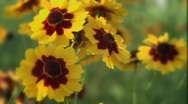 Close up Flower Meadow Stock Footage