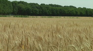 Wheat and tractor Stock Footage
