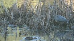 P01102 Wetland Wildlife Stock Footage
