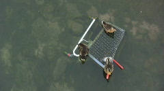 Aerial view of ducks Stock Footage