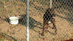 Caged Dog Barking 1834 Stock Footage