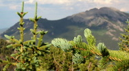 Stock Video Footage of Tree Branch, with mountains
