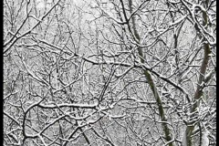 Naked branch on the trees in winter time Stock Footage