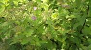 Decorative bush. Stock Footage
