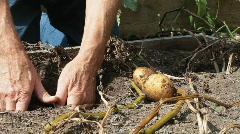 Potato Harvest Stock Footage