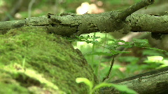 Moss-covered fallen log Stock Footage